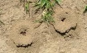 boobs ant hills